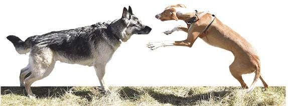 Hundeskov DSC_3270 fritlagt